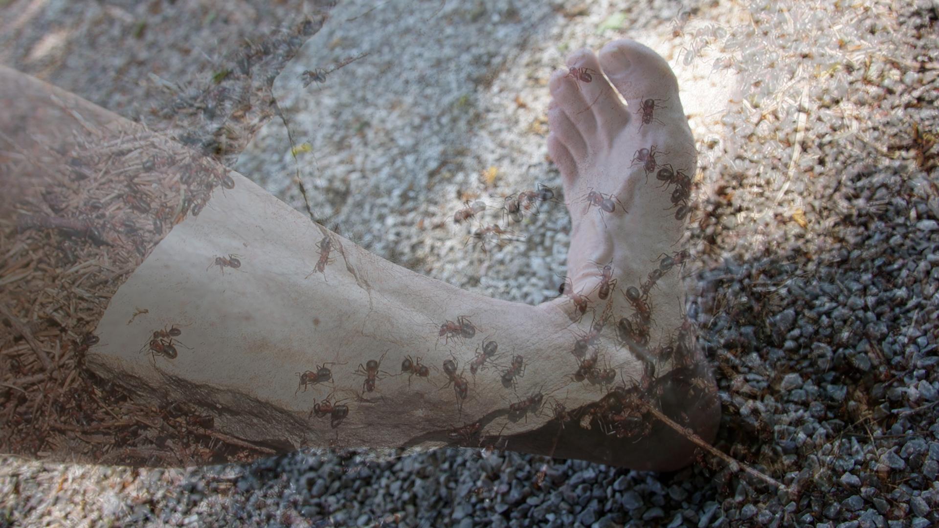 Ameisenkribbeln / Ameisenlaufen / Kribbeln in Armen oder Beinen