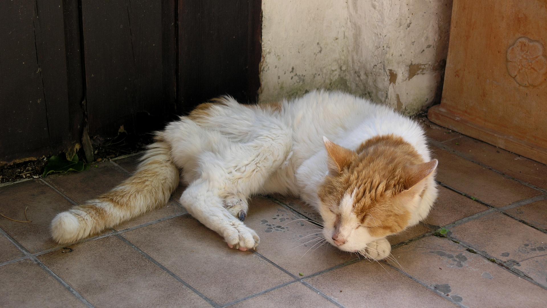 Alte Katze Magert Ab