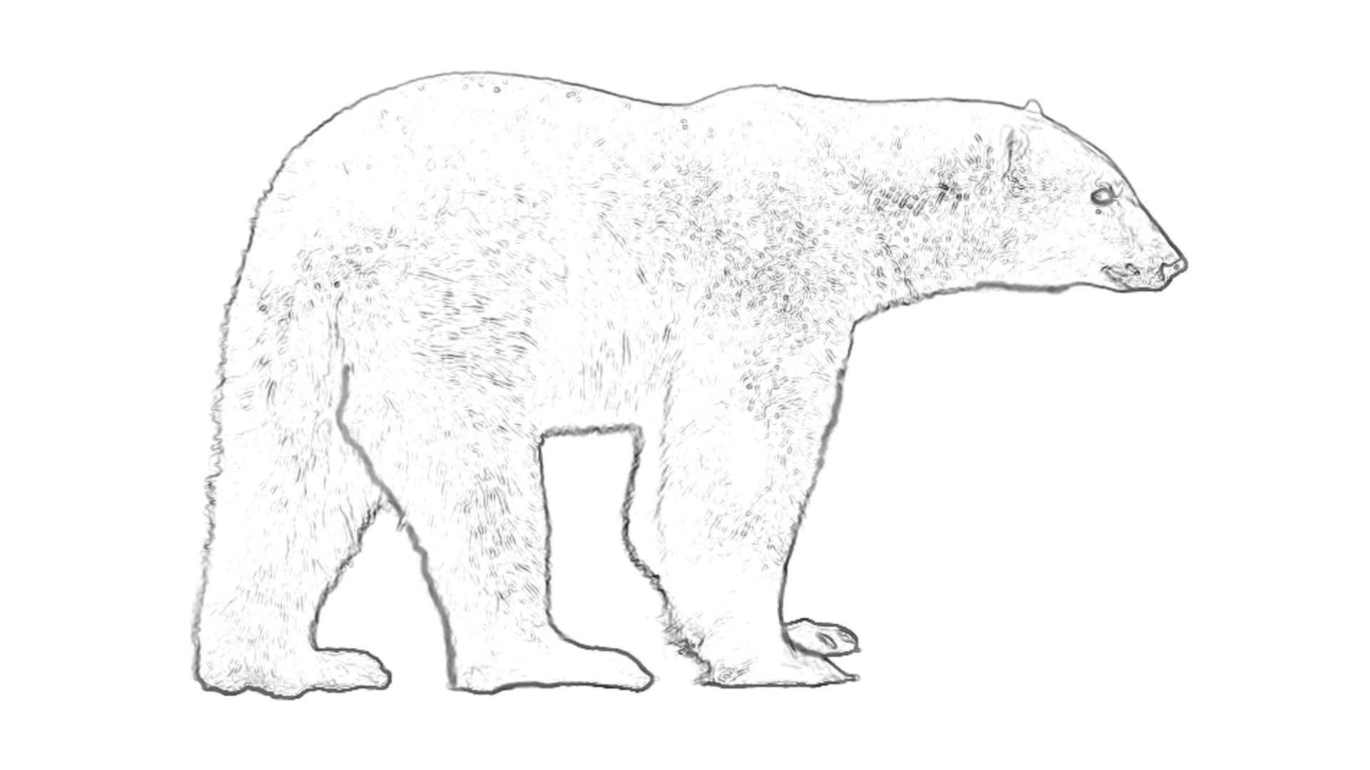 Malvorlagen Eisbär