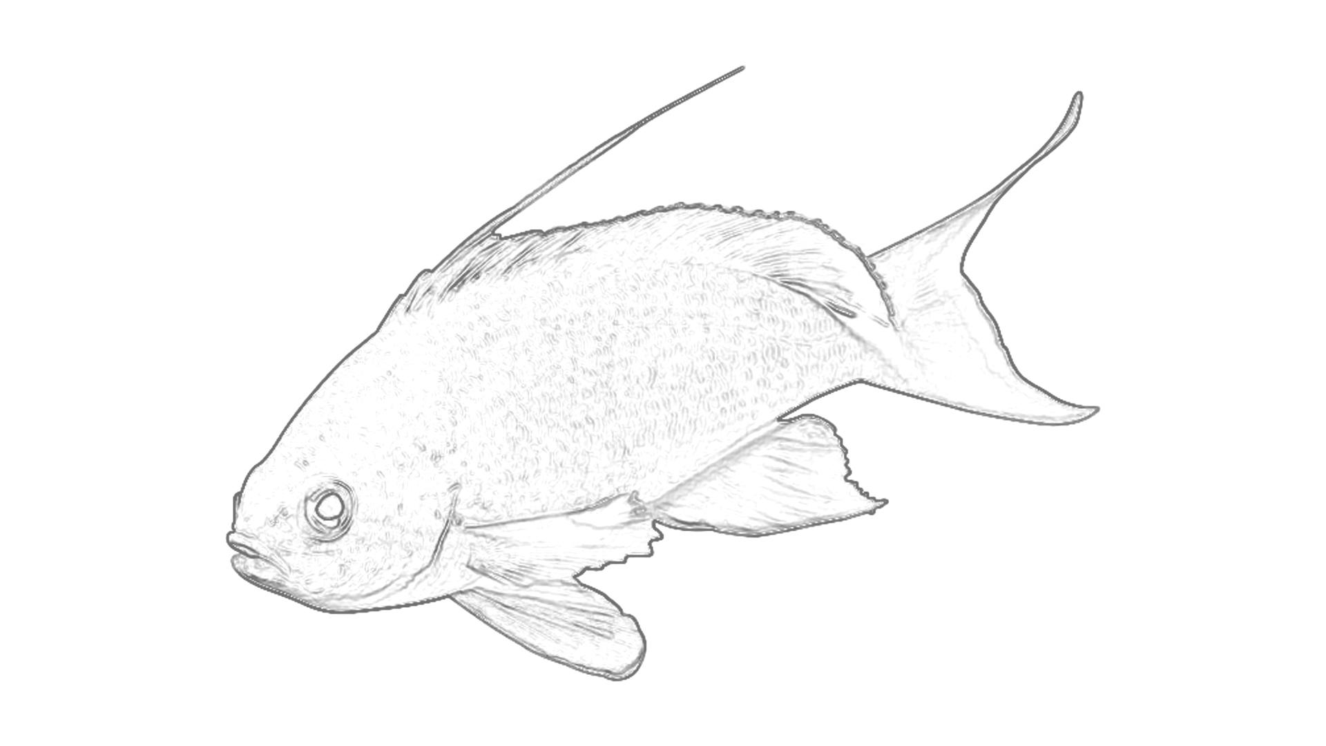 Malvorlagen: Fisch