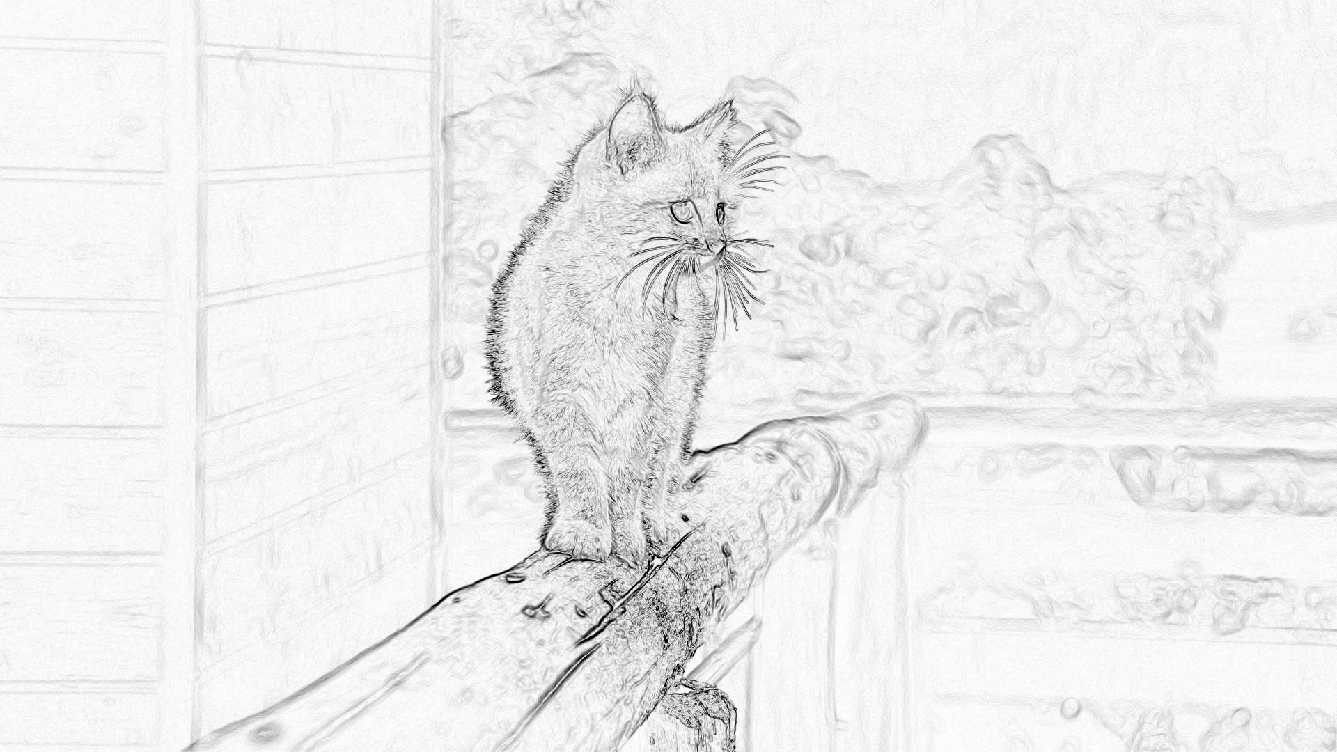 Malvorlagen: Kätzchen