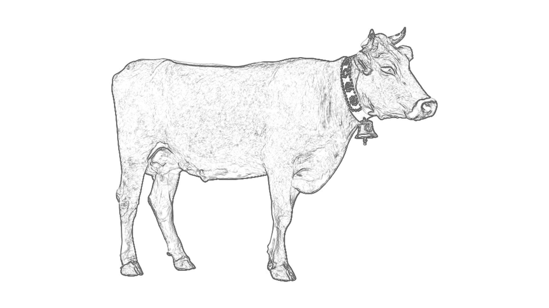 Malvorlagen: Kuh
