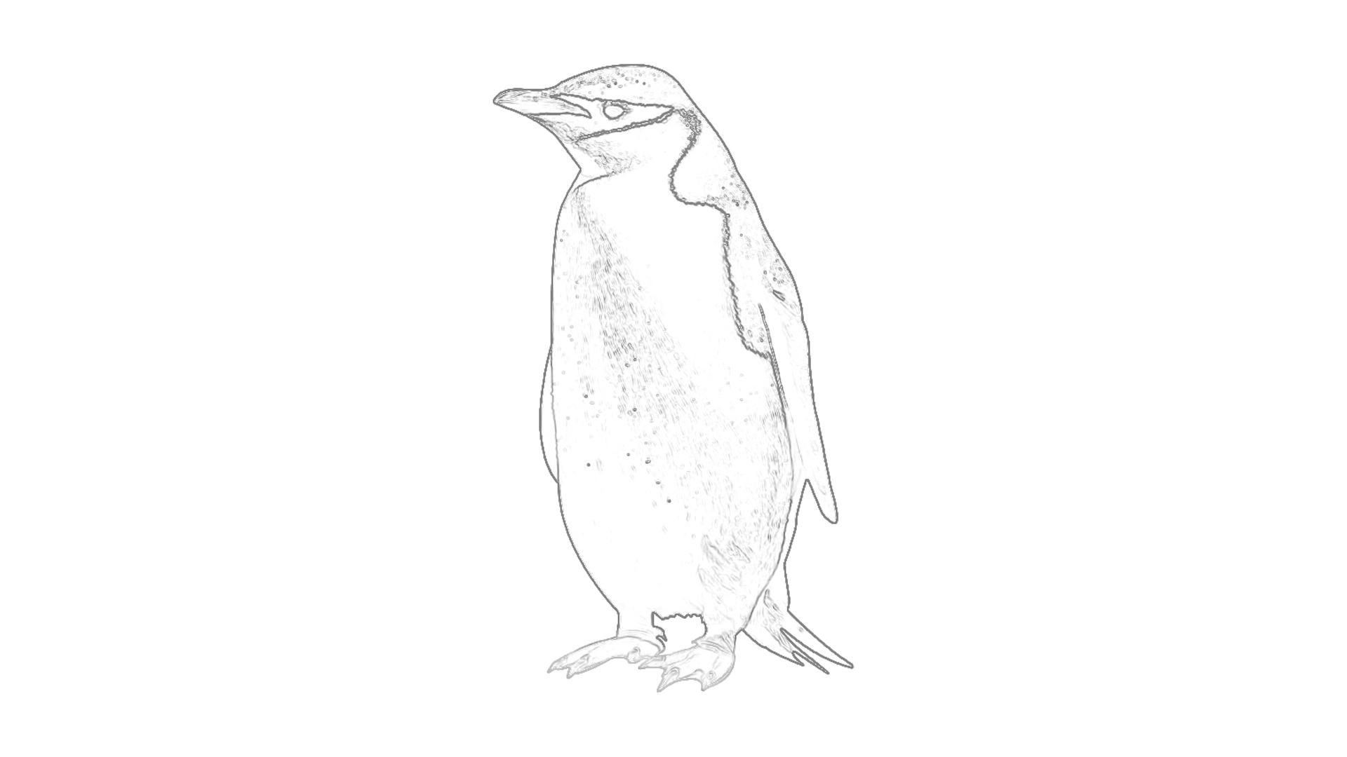 Malvorlagen: Pinguin