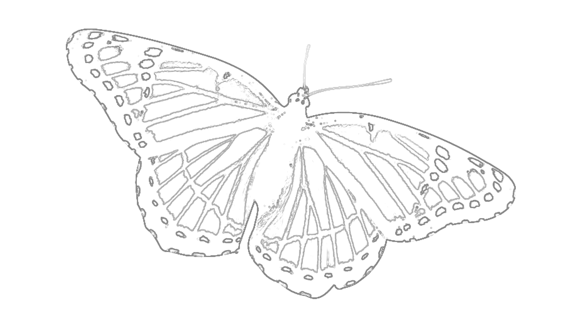 Tolle Malvorlagen Zum Thema Schmetterling Kostenlos Zeitgenössisch ...