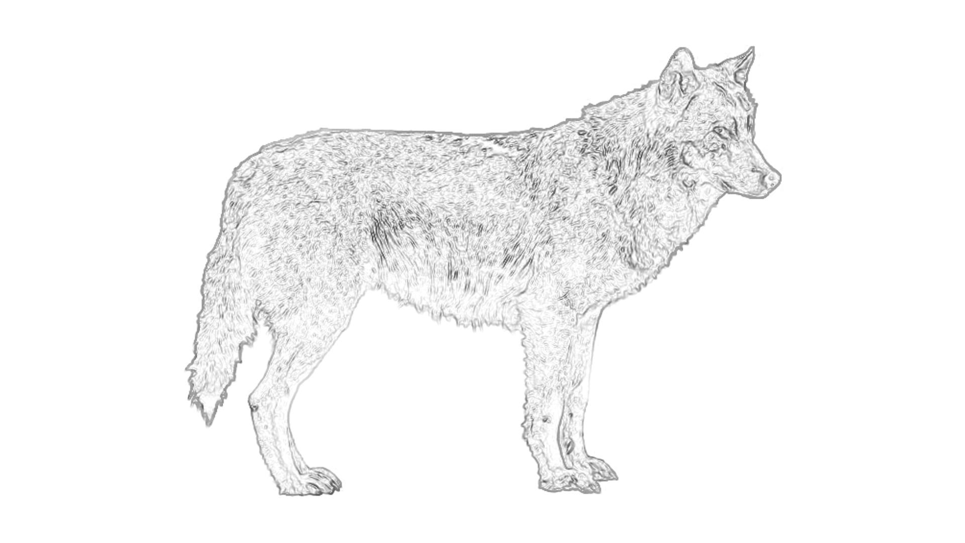 malvorlagen wolf