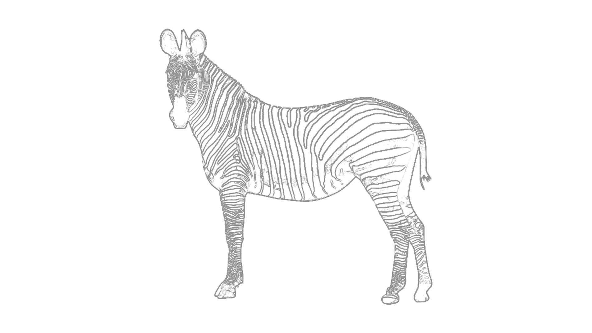 Malvorlagen: Zebra